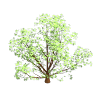 /File/en/Archive/Old 32bpp/Acersaccharum1-smallspring.png